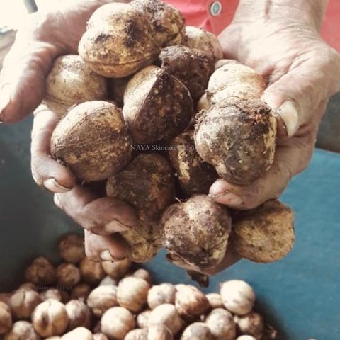Cacay Früchte für die Pflanzung
